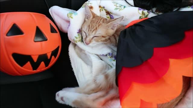 little girl trying to sleep too like her pet cat in the car seat - ショートヘア種の猫点の映像素材/bロール