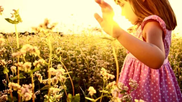 slo mo little girl walking in the buckwheat field - human limb stock videos & royalty-free footage