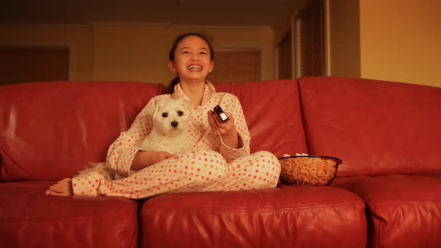 little girl watching television with pet  dog - havanese stock videos & royalty-free footage