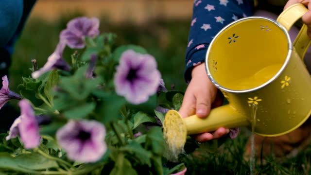 stockvideo's en b-roll-footage met kleine meisje drenken bloemen in de tuin - gieter