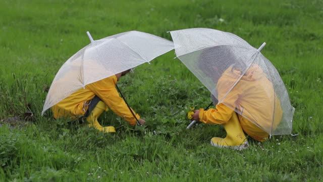 little girls are picking flowers under rain - ombrello video stock e b–roll