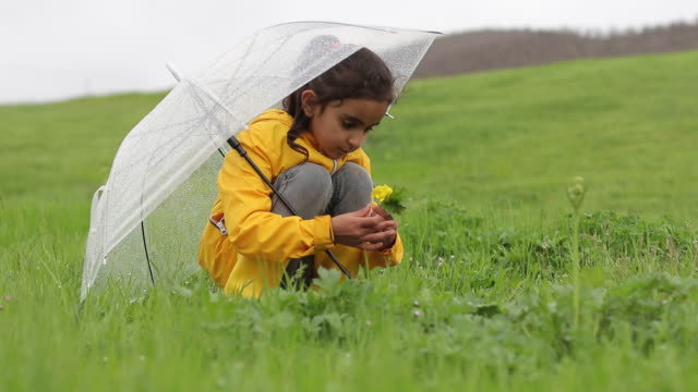 little girls are picking flowers under rain - holding stock videos & royalty-free footage