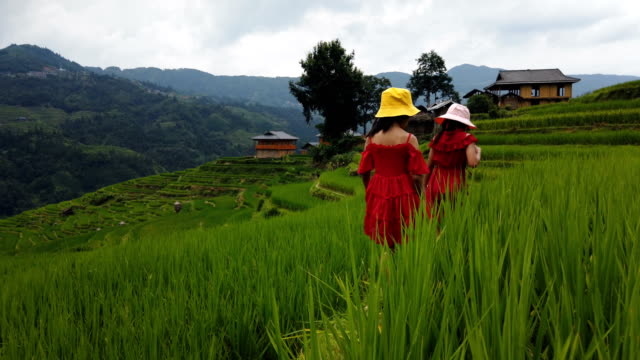 stockvideo's en b-roll-footage met kleine meisjes lopen in terrassen veld, jiabang, guizhou, china. - cereal plant