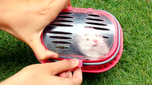 little hamster desperate to get out of the cage and a hand that releases him - parte de una serie video stock e b–roll