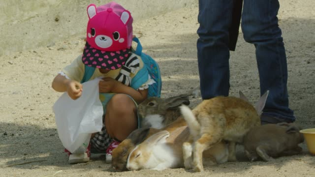 little japanese girl feeds group of feral domestic rabbits - hat stock videos & royalty-free footage