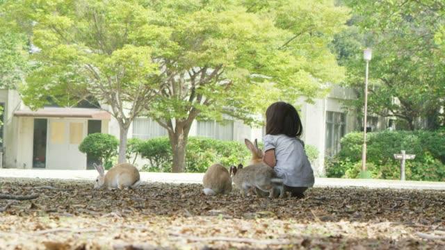 vídeos de stock e filmes b-roll de little japanese girl feeds group of feral domestic rabbits - cinco animais