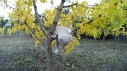 Little kitten falls from tree on meadow in nature