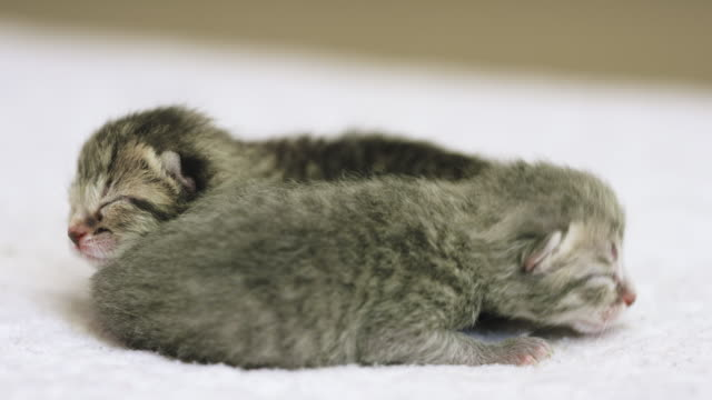 little kittens - soft blanket stock videos and b-roll footage