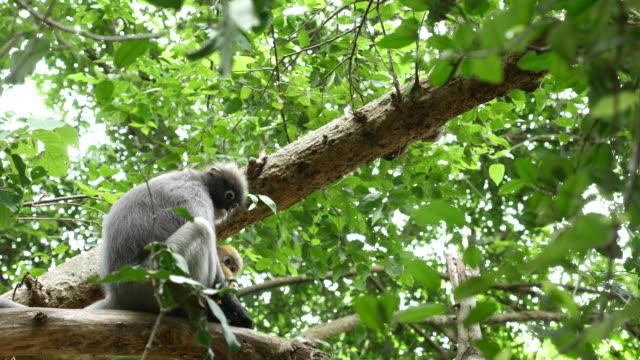 Little monkey in the tree