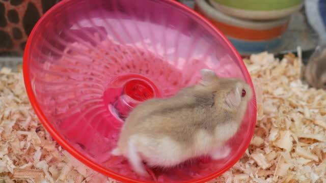 Little mouse running