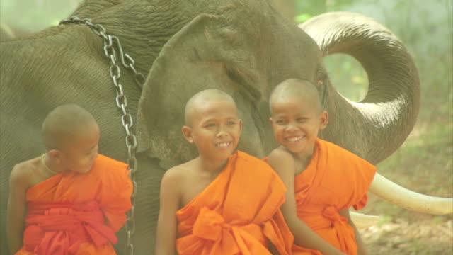 little novice monks and elephant - monk stock videos & royalty-free footage
