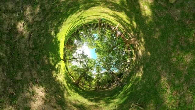little planet rainforest tropical forest with large trees on a sunny day - 360 stock videos & royalty-free footage