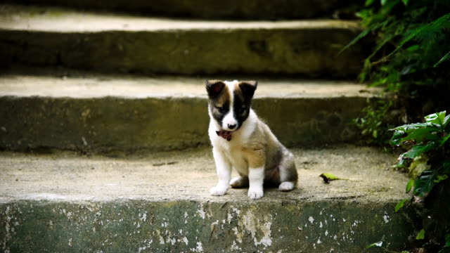 little puppy - film montage stock videos & royalty-free footage