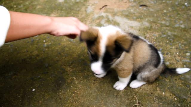 vidéos et rushes de petit chiot - two animals