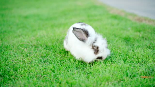 little rabbit he's running on the green grass. the concept of the world's major festivals such as easter. - cottontail stock videos & royalty-free footage