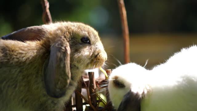 Little rabbit in summer day