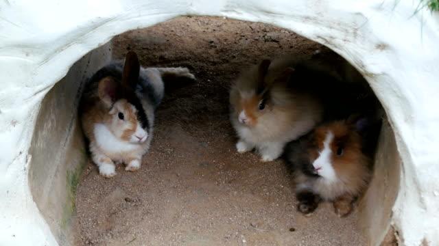 stockvideo's en b-roll-footage met kleine konijn in de tuin zitten. - cottontail