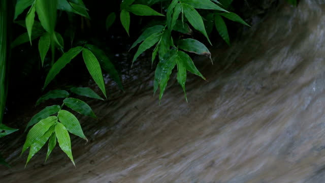 little river in the rainforest - spring flowing water stock videos and b-roll footage