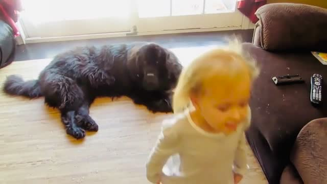 little sierra has the cheerleading spirit and wants to show her best friend, sebastian the newfoundland, how it's done. sebastian might not be game... - game show stock videos & royalty-free footage