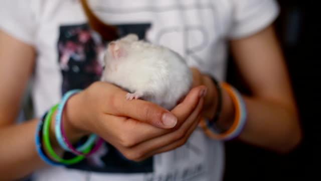 vídeos y material grabado en eventos de stock de little sirian hamster in the hands of a girl, walking and smelling nonstop - hamster