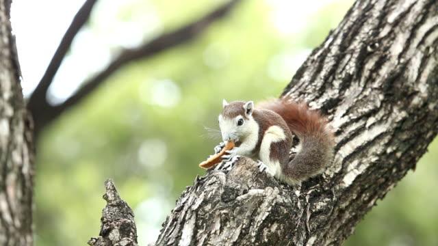 kleines eichhörnchen essen brot - schwanz stock-videos und b-roll-filmmaterial