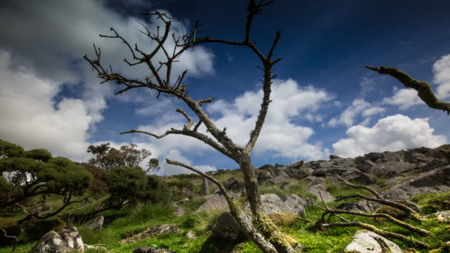 little tree in the wilderness - dartmoor stock videos & royalty-free footage