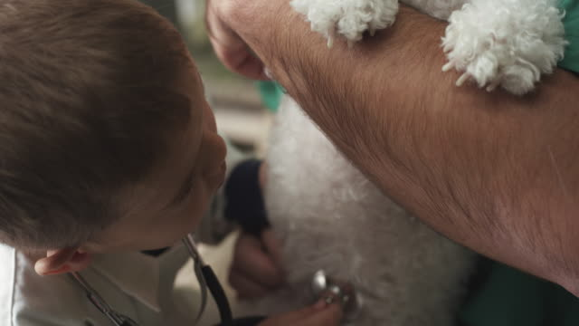 little veterinarian and dog - havanese stock videos & royalty-free footage