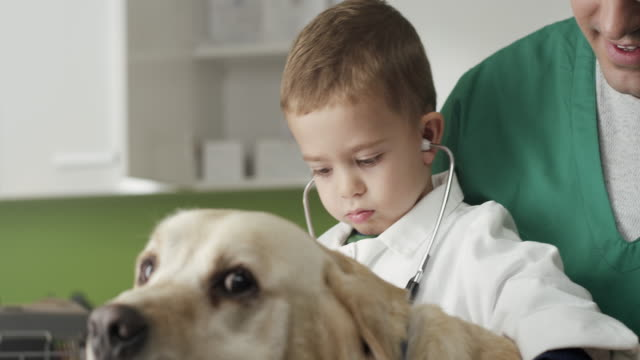 little veterinarian and dog - animal hospital stock videos & royalty-free footage