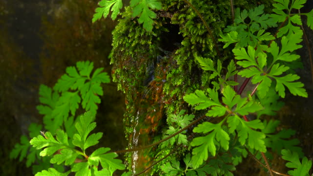 Little well with moss and leaves
