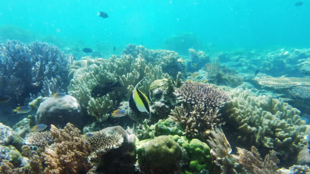 live life at it's deepest - butterflyfish stock videos & royalty-free footage