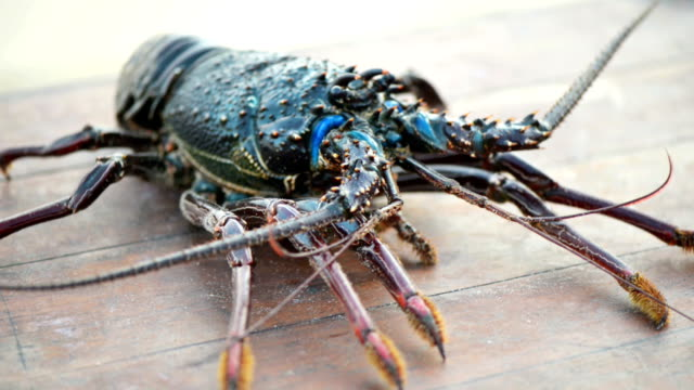live lobster - lobster seafood stock videos and b-roll footage