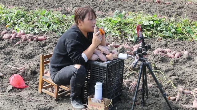 live streamer zeng shuying sell sweet potato as she livestream video on a smartphone on a farm on october 23 in sichuan county, jiangsu province of... - streamer stock videos & royalty-free footage