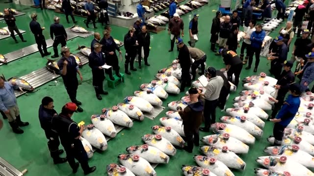 """lively bidding calls resounded at the newest incarnation of """"japan's kitchen"""" early oct. 11 as the first auctions at the toyosu fish market got under... - せり売り点の映像素材/bロール"""