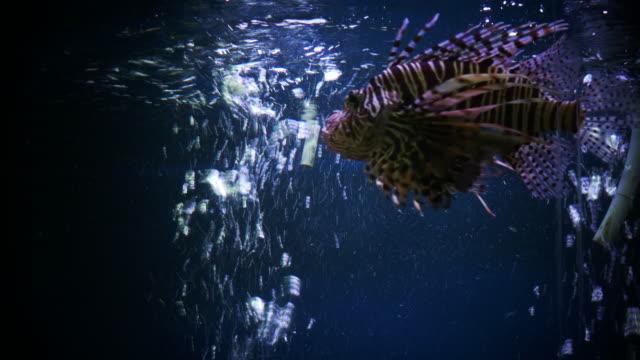vídeos y material grabado en eventos de stock de un arrecife de coral vivo con muchos peces de colores - escafandra autónoma
