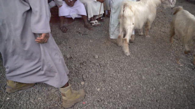 ms livestock-markt in oman - medium group of animals stock-videos und b-roll-filmmaterial