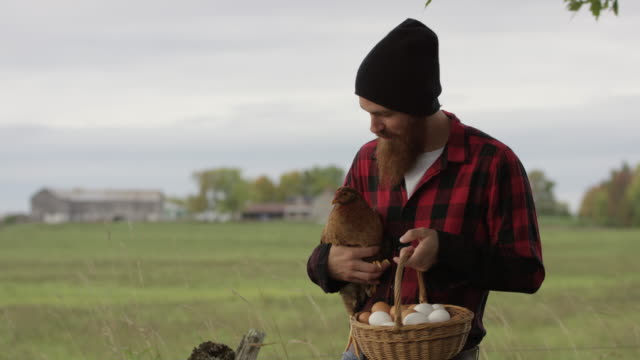 living a happy life on the farm - poultry stock videos & royalty-free footage