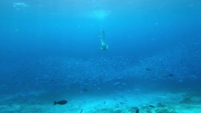 living my life to the fullest - deep sea diving stock videos & royalty-free footage