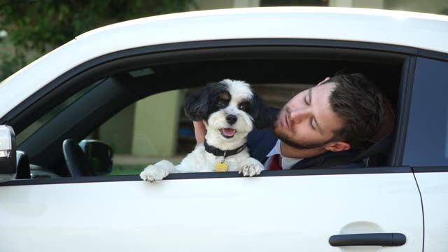 living with pets - businessman driving with his dog - pet owner stock videos & royalty-free footage