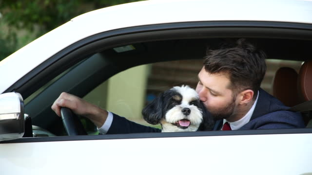 Living with Pets - Businessman Driving with His Dog