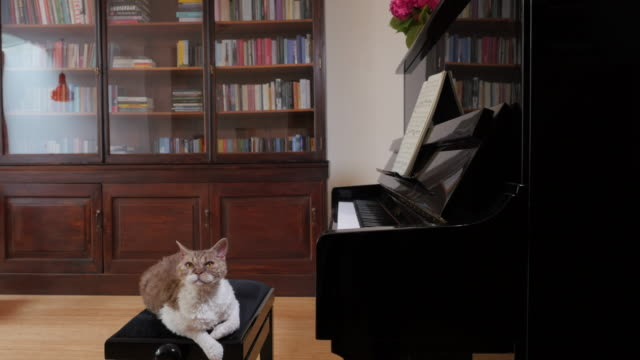Living with Pets, cat on piano stool