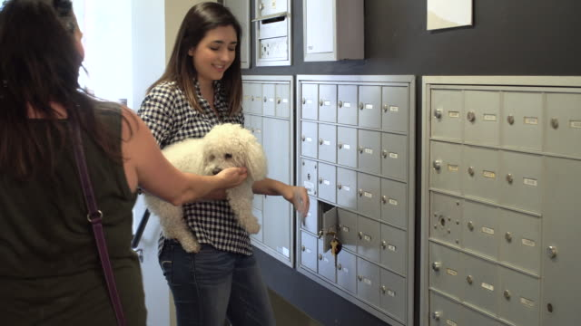 living with pets - getting the mail - mailbox stock videos and b-roll footage