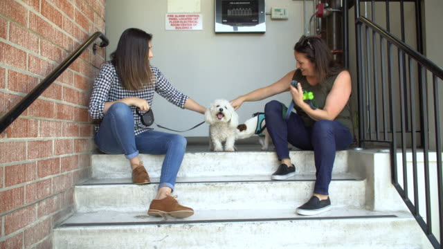 living with pets - hanging out on the steps to the loft - dog walker stock videos and b-roll footage