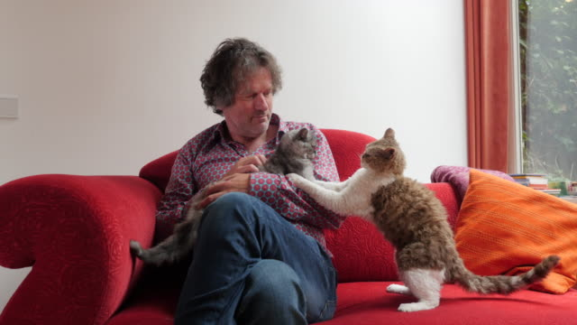 living with pets, man with two cats - cross legged stock videos & royalty-free footage
