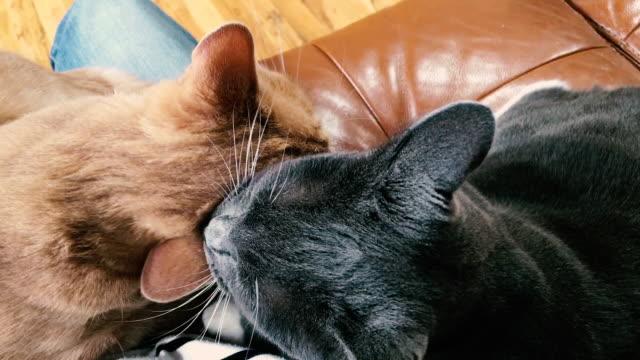 vídeos de stock, filmes e b-roll de living with pets. - bigode de animal