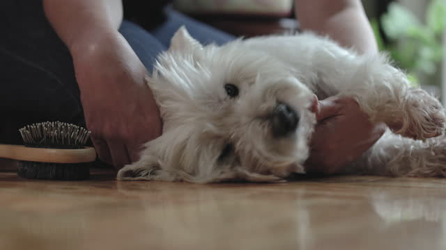 living with pets - drying stock videos & royalty-free footage