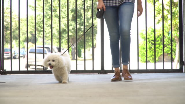 living with pets - walking the dog - dog walker stock videos and b-roll footage