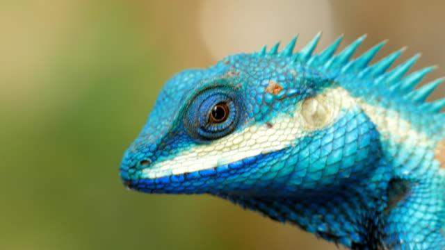 lizard in tropical rain forest.