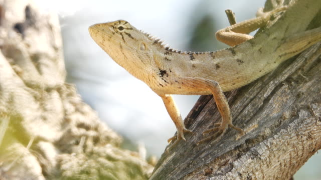 Lizard resting on a tree