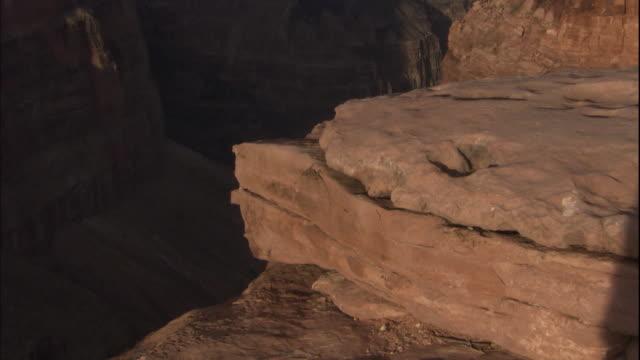 A lizard suns itself on a rock.