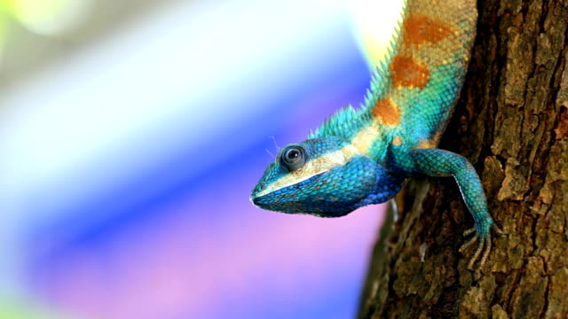 lizard. - pälsteckning bildbanksvideor och videomaterial från bakom kulisserna